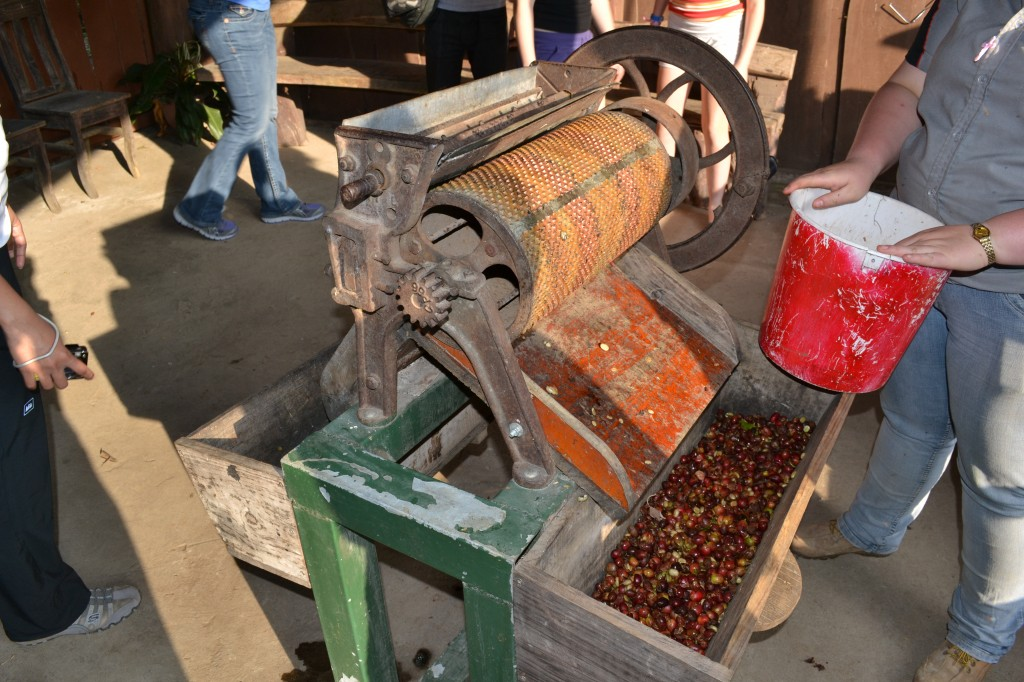 Manual Coffee berry crusher